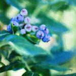 Wiersz Maria Konopnicka - Na jagody