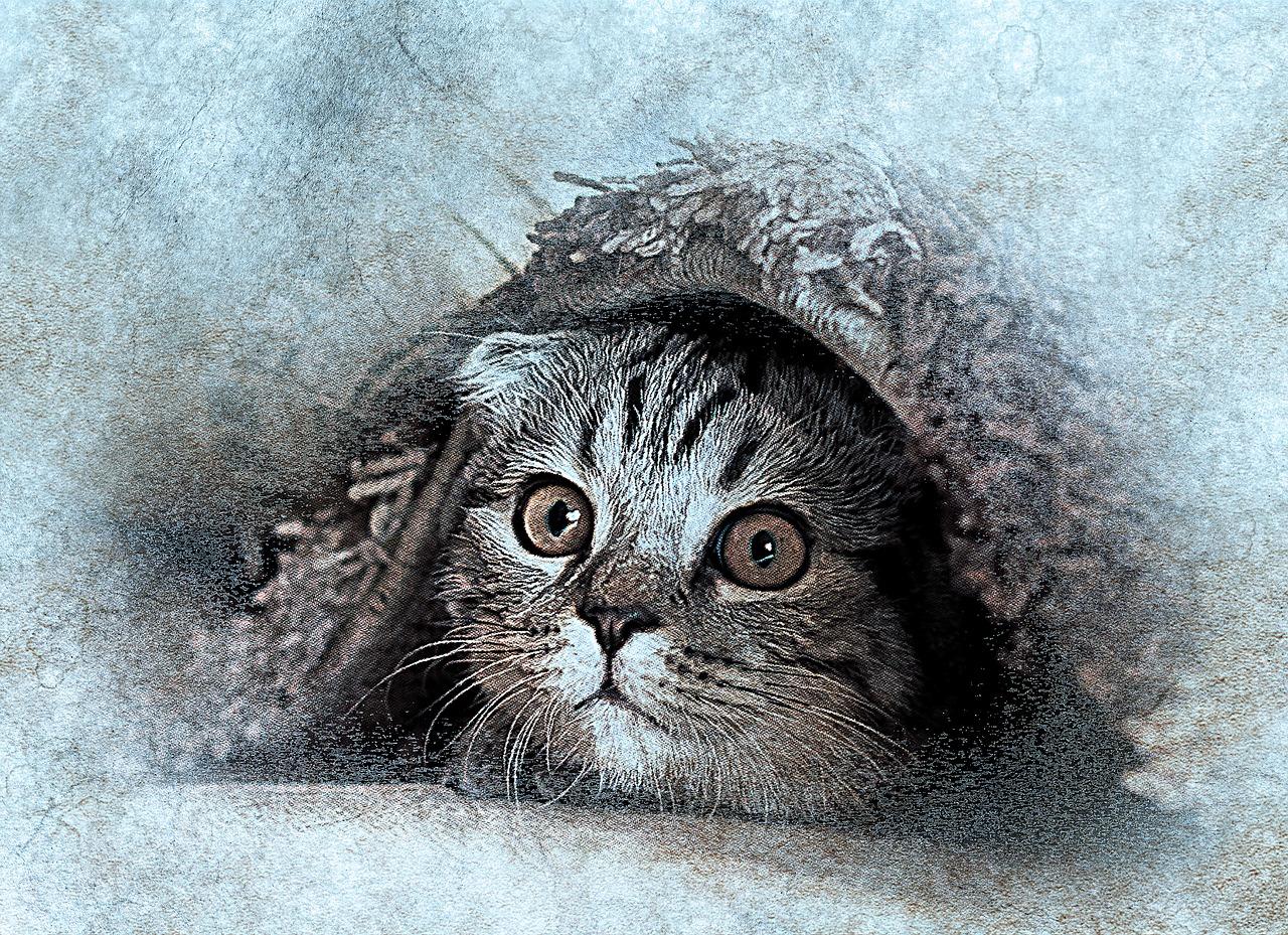 Wiersz Stanisław Jachowicz - Chory kotek
